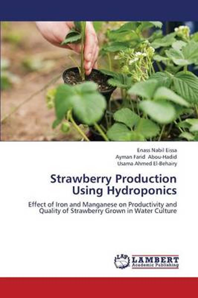 Strawberry Production Using Hydroponics