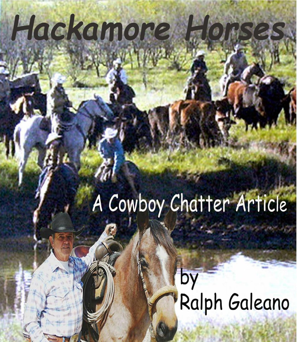 Hackamore Horses A Cowboy Chatter Article