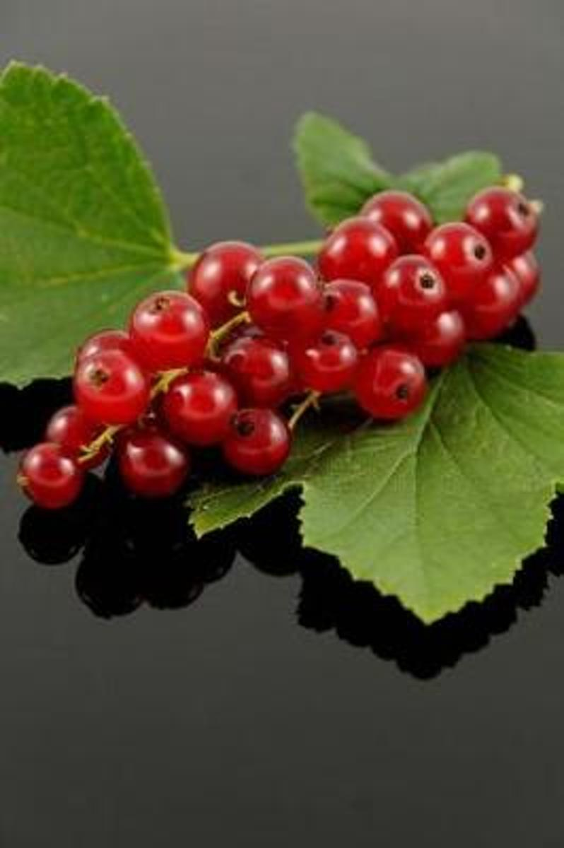 Red Currant Berries Journal