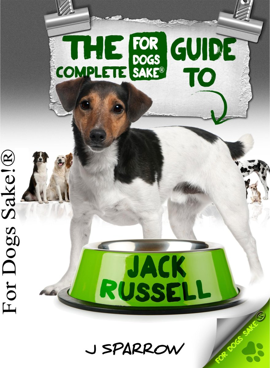 The Complete Guide To Jack Russell Terrier