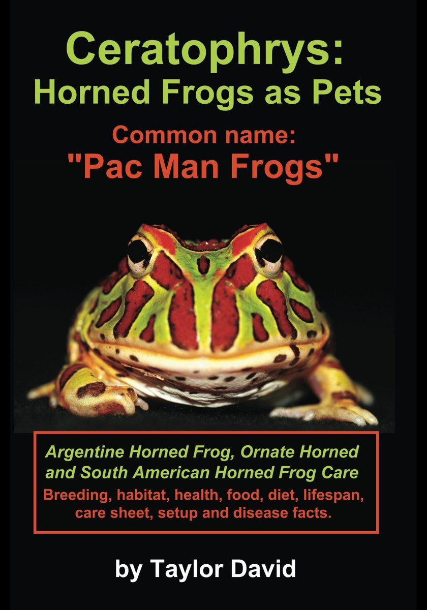 Ceratophrys: Horned Frogs as Pets: Common name: ''Pac Man Frogs''
