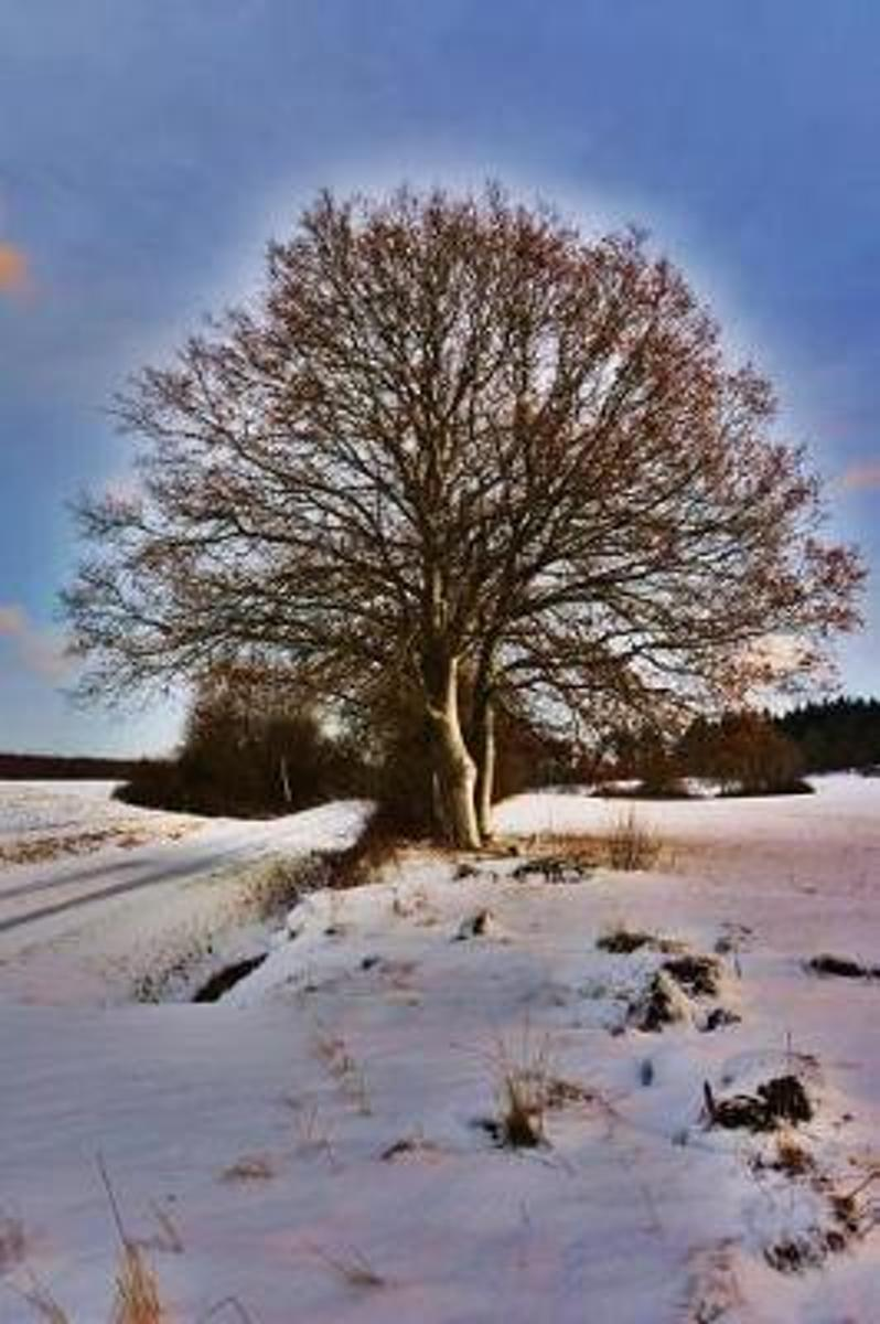 Solitary Sunlit Tree on a Snowy Winter Morning Serenity Journal