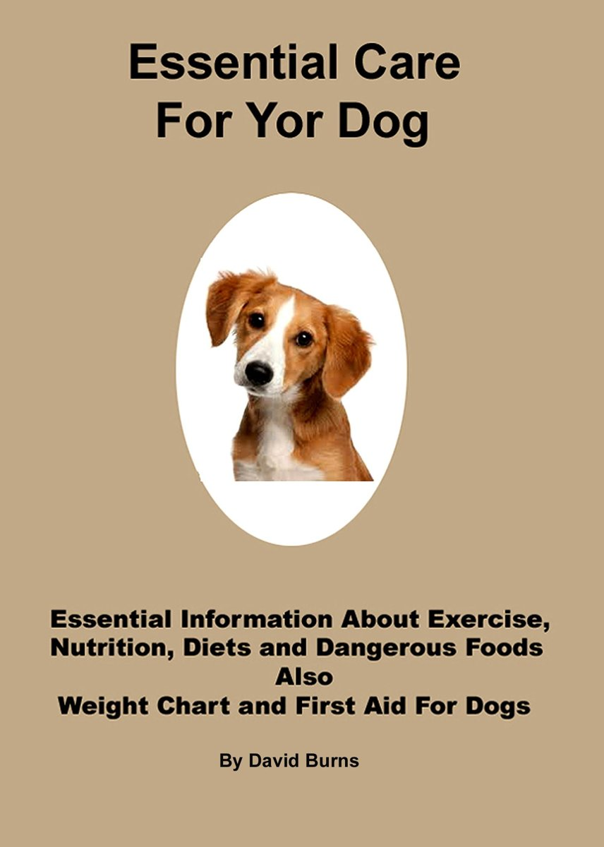 Essential Care For Your Dog