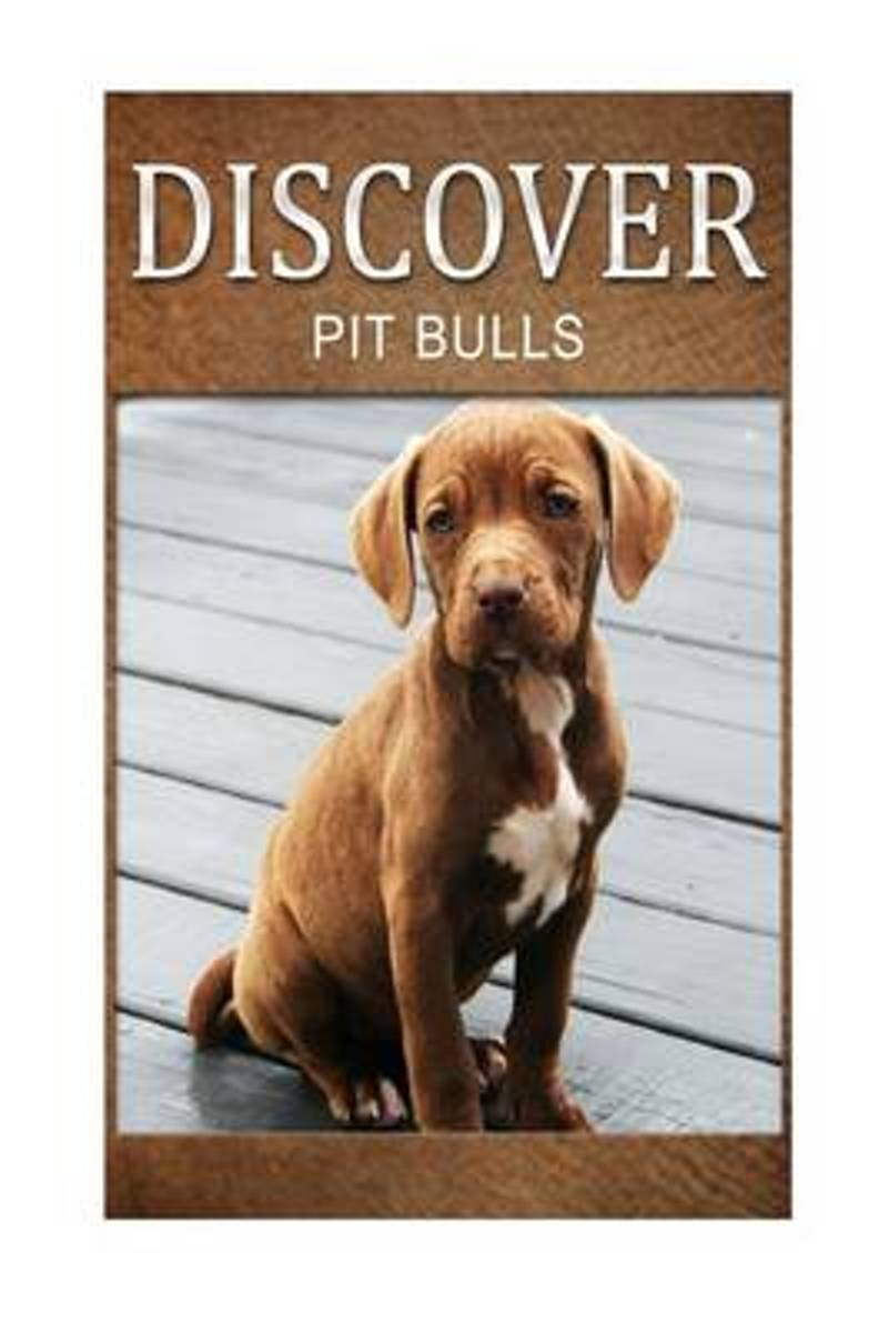 Pit Bull - Discover