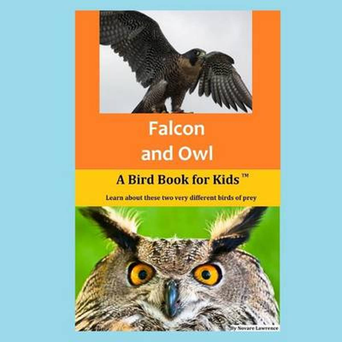 Falcon and Owl