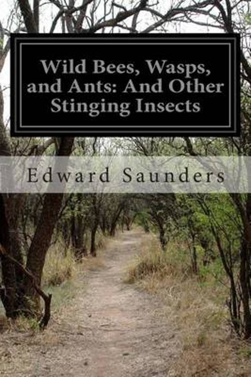 Wild Bees, Wasps, and Ants