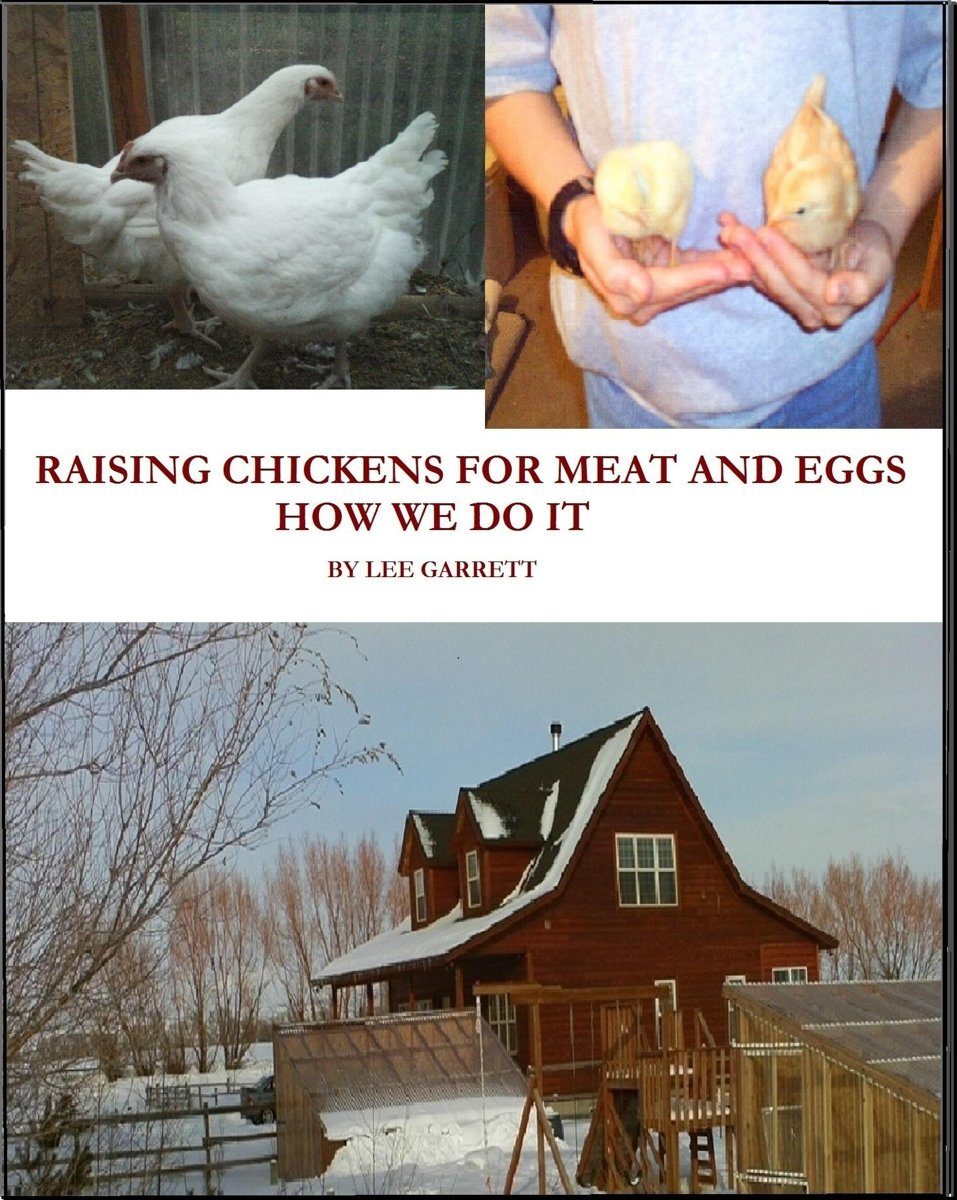 Raising Chickens For Meat and Eggs: How We Do It