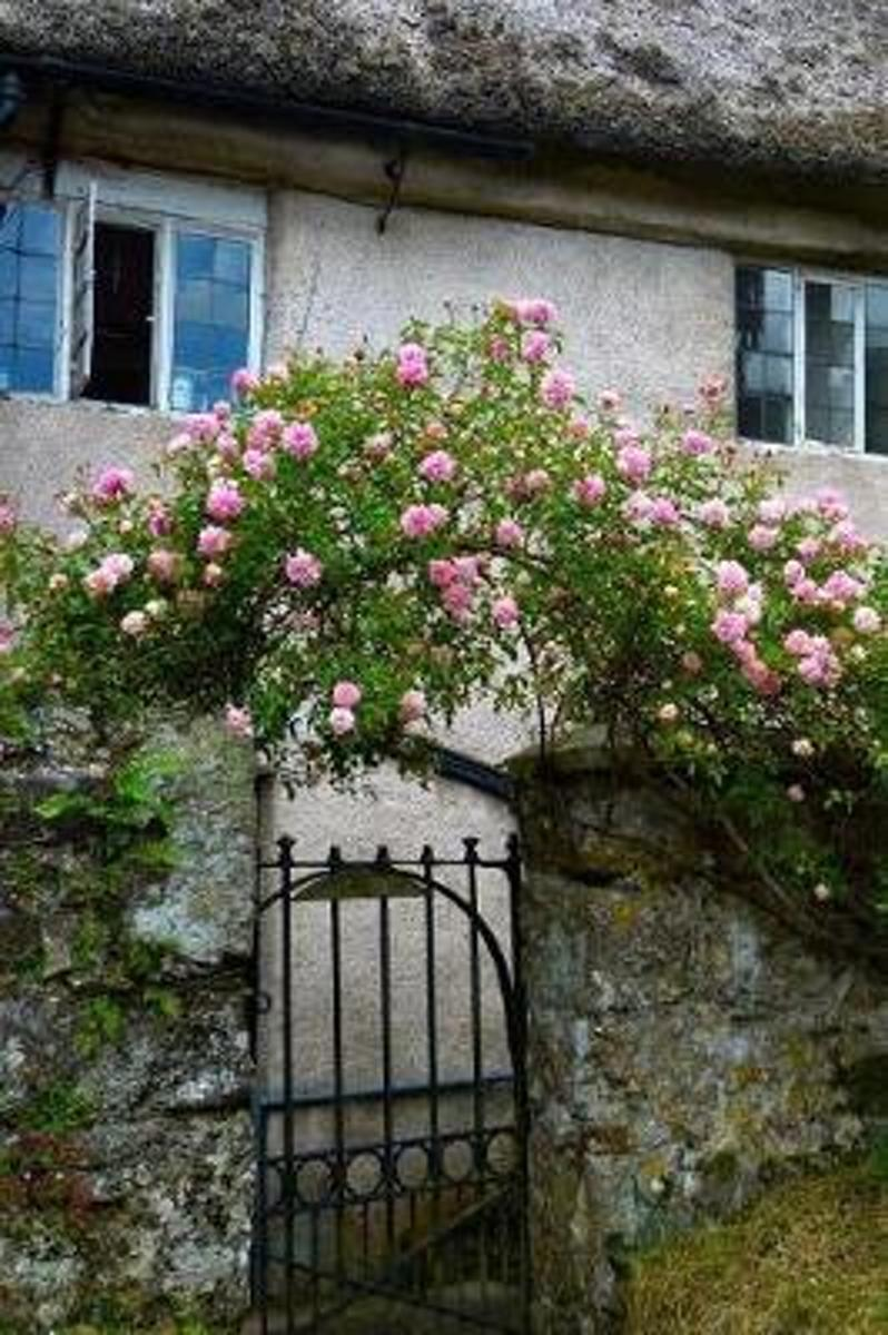 Pink Roses and a Garden Gate English Cottage Life Journal
