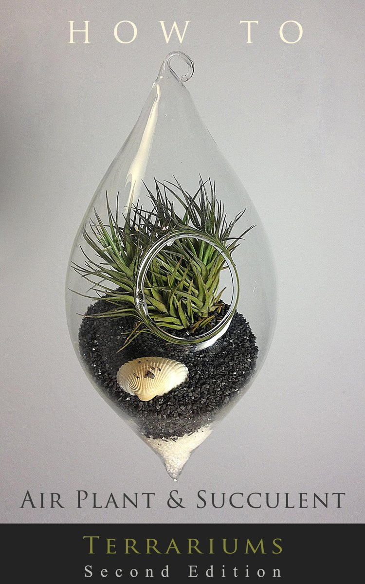 How to... Air Plant and Succulent Terrariums
