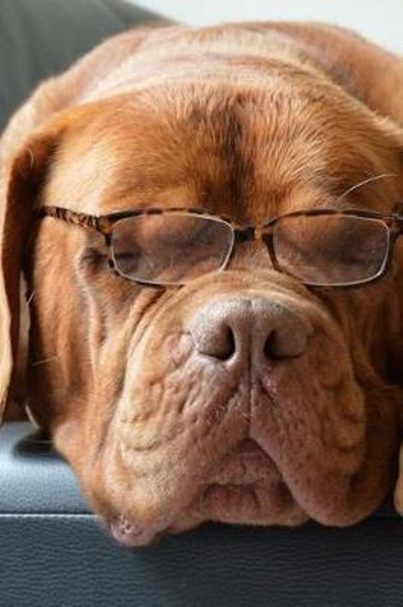Napping Bordeaux Dog Wearing Reading Glasses Pet Journal