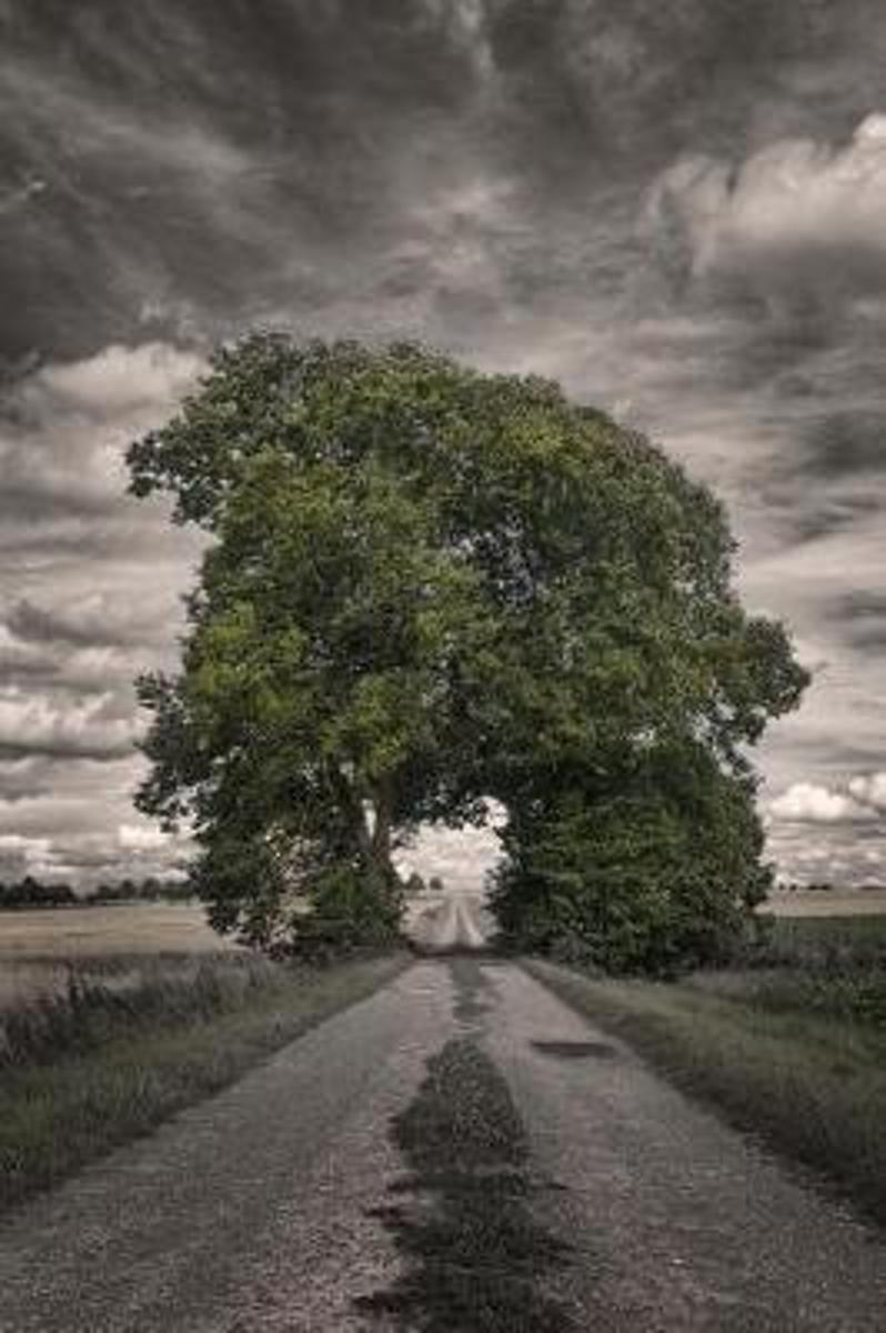Green Grove of Trees Arching Over a Pathway on a Stormy Day Journal