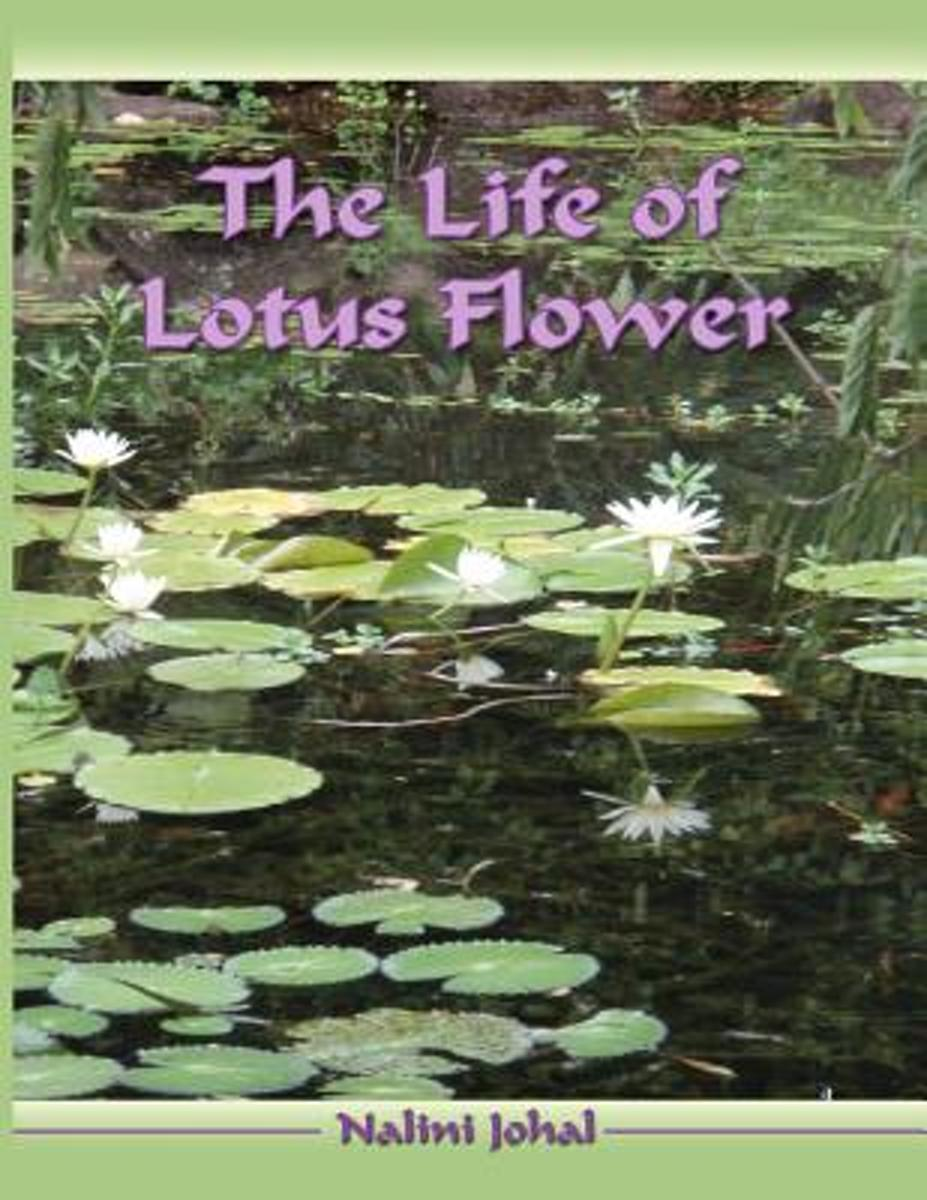 The Life of Lotus Flower
