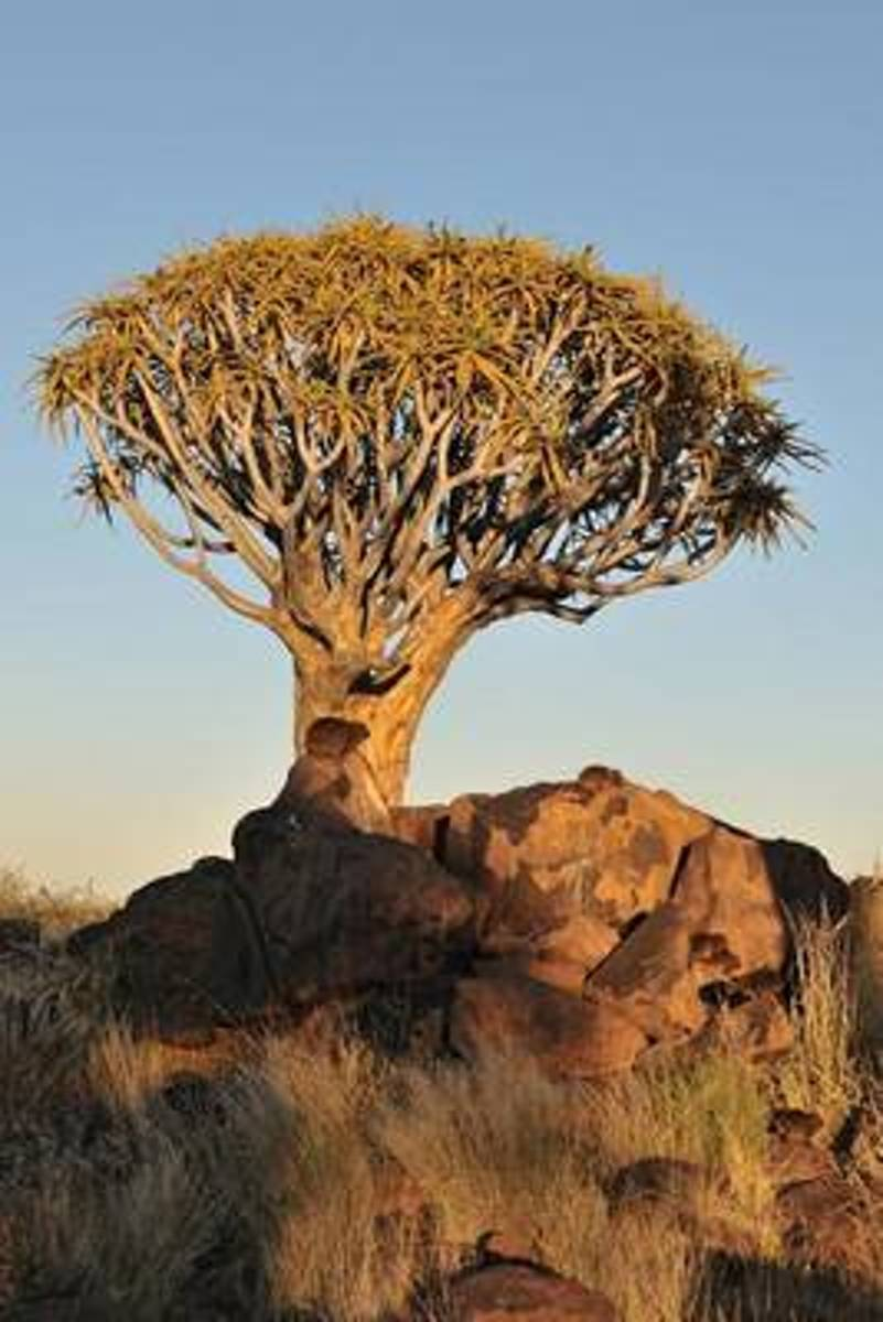 Sunrise at the Quiver Tree Forest Keetmanshoop Namibia Africa Journal