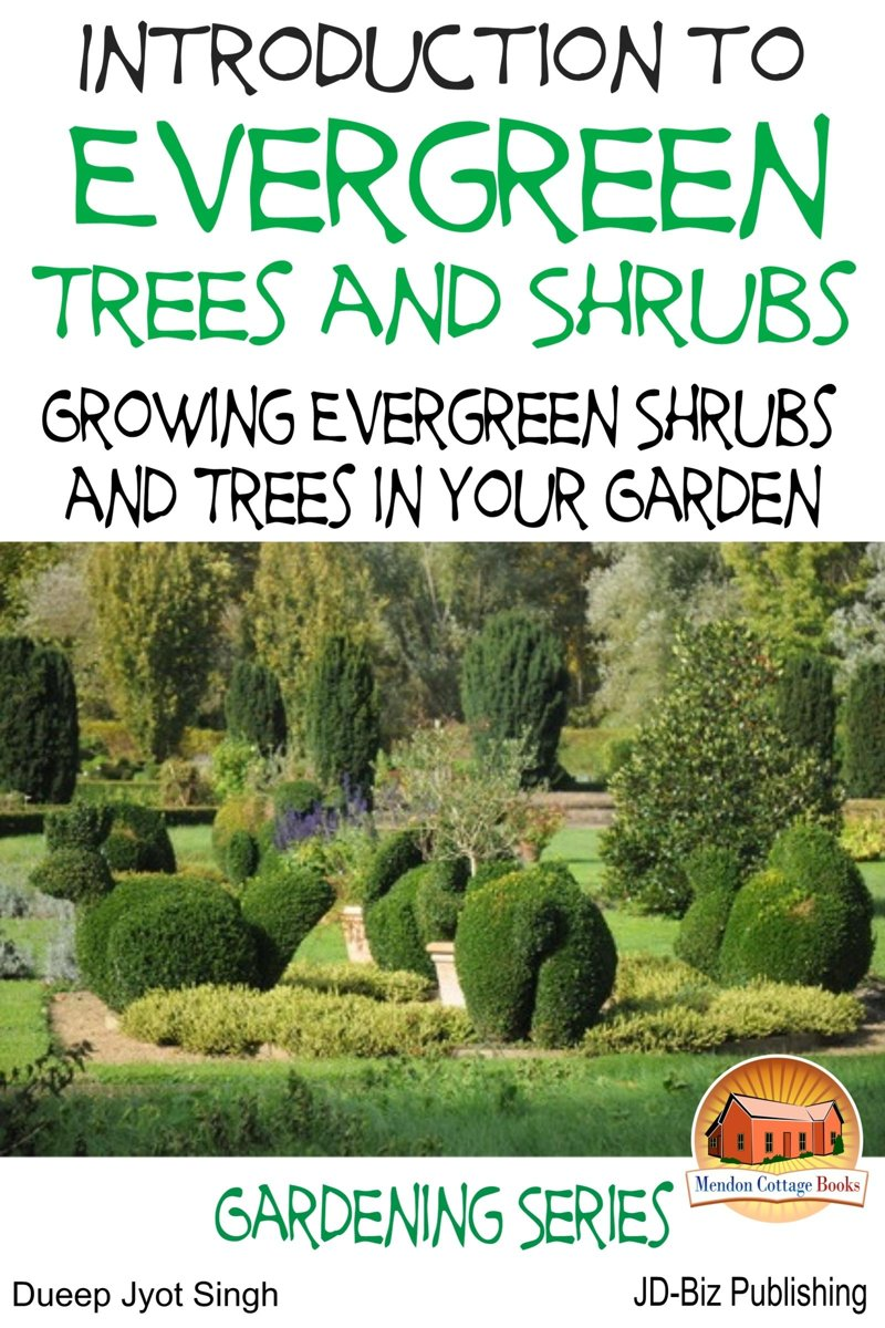 Introduction to Evergreen Trees and Shrubs: Growing Evergreen Shrubs and Trees in Your Garden