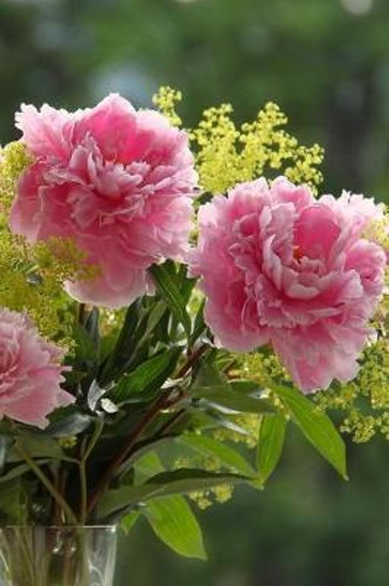 Pink Peony Flowers in a Vase Florist Journal