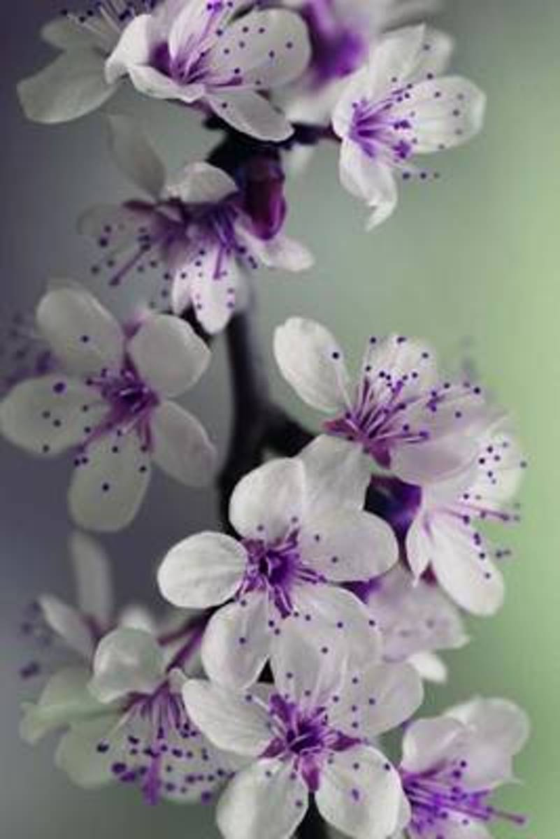 Mind Blowing Purple and White Flowers Journal