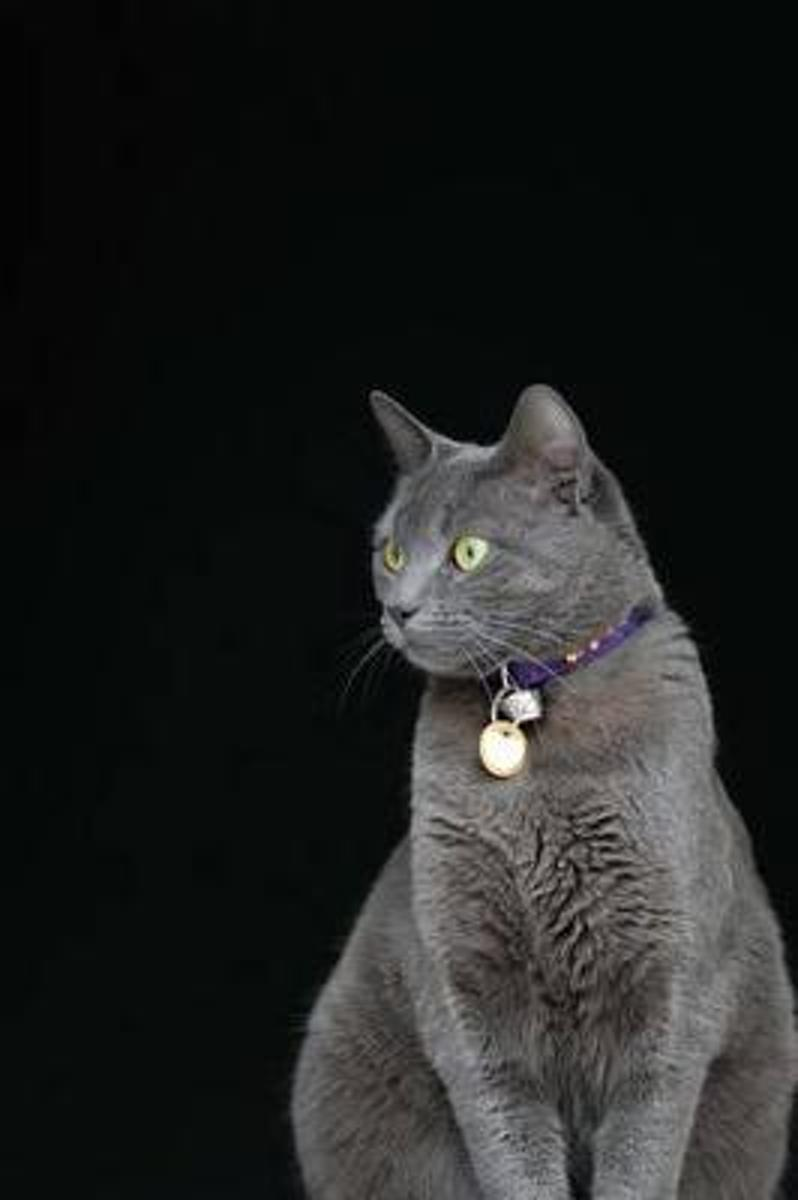 Cool Smoky Gray Domestic Shorthair Cat Journal